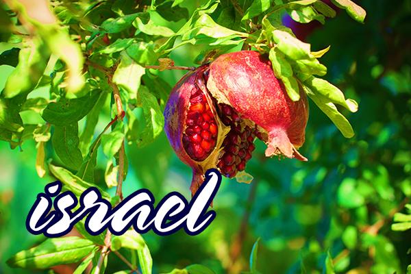 ISRAEL - TARAMUL RELIGIILOR Primavara 2020