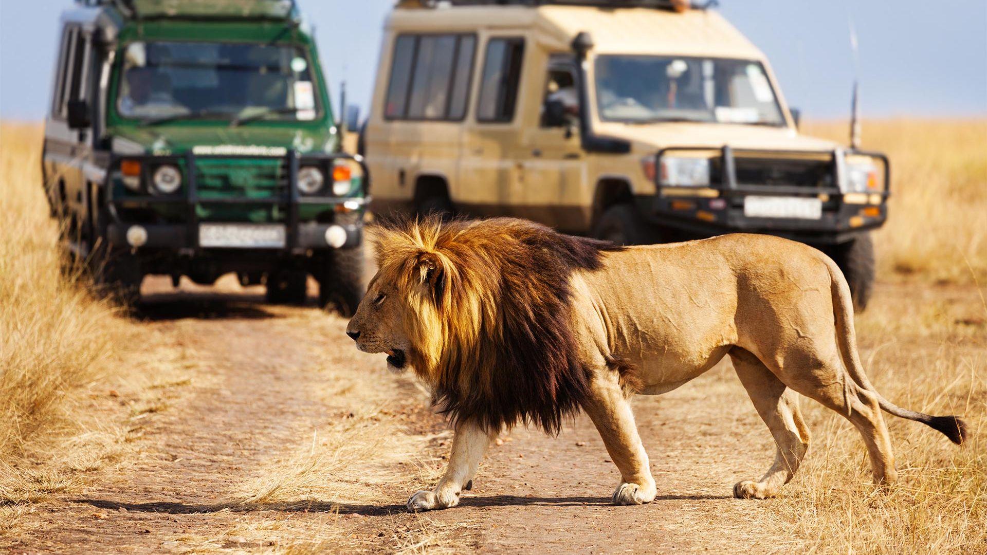 Share a trip Kenya, safari Marea Migratie & Diani Beach, 8 zile - 05 iulie 2021