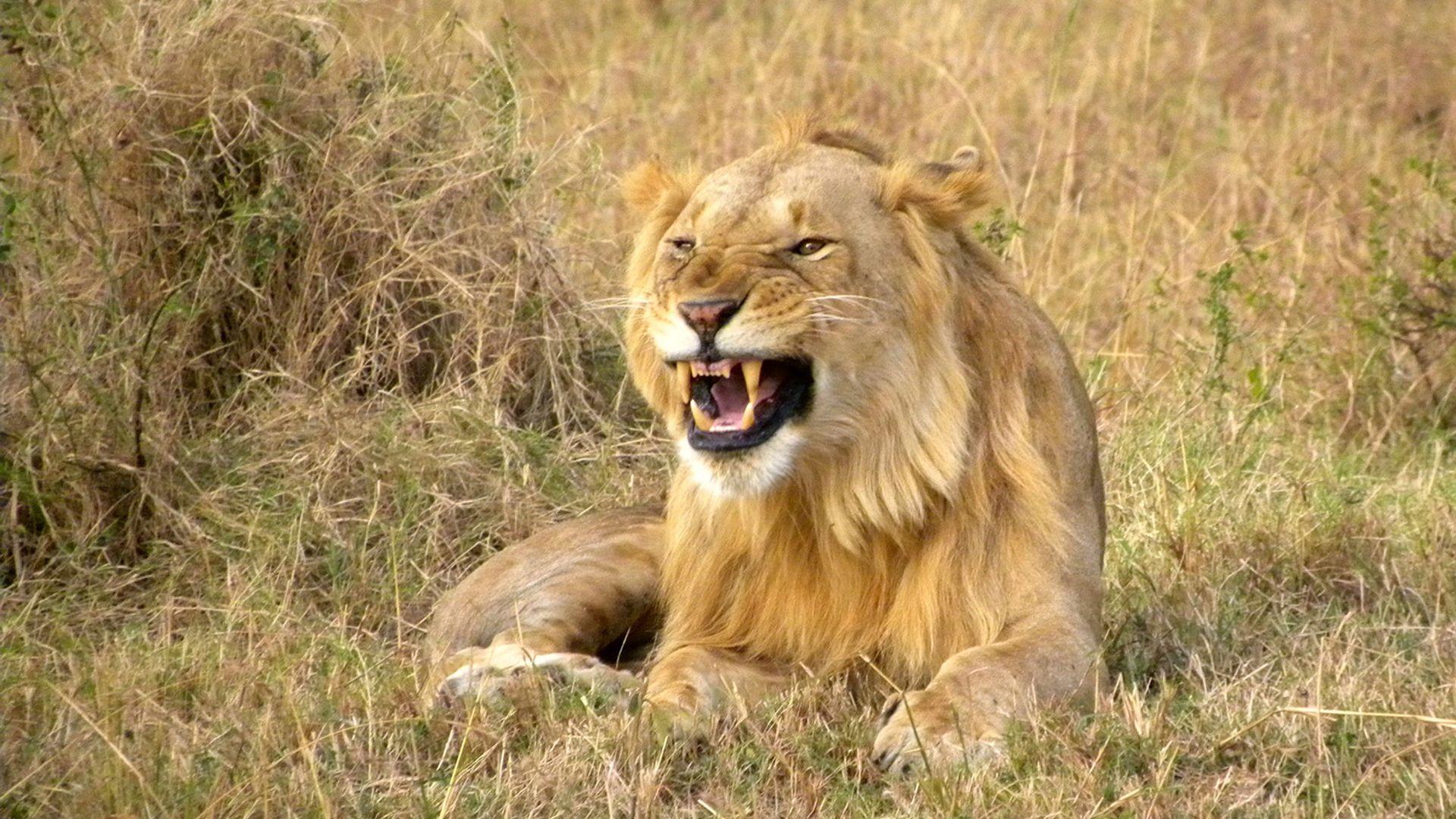 Circuit de grup - Essential Kenya, noiembrie 2021 - cu Yulicary Sarracent