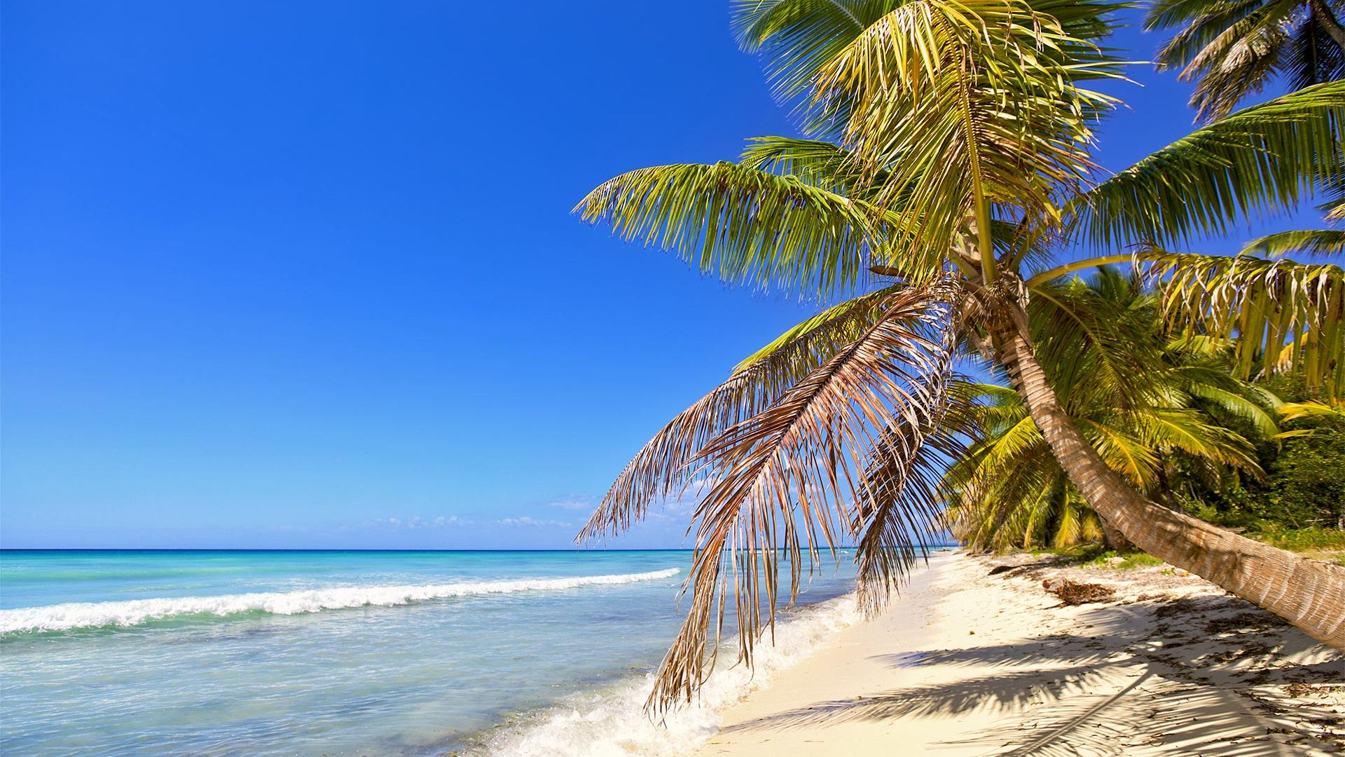 Sejur Plaja Punta Cana, Republica Dominicana, 12 zile - septembrie 2021