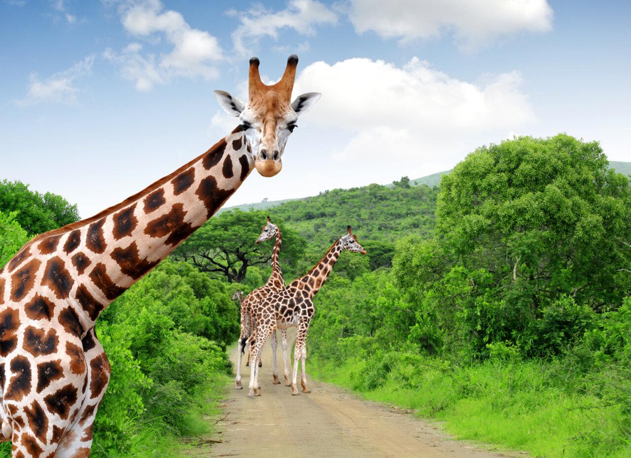 Africa de Sud Circuit si Sejur Parcul Kruger