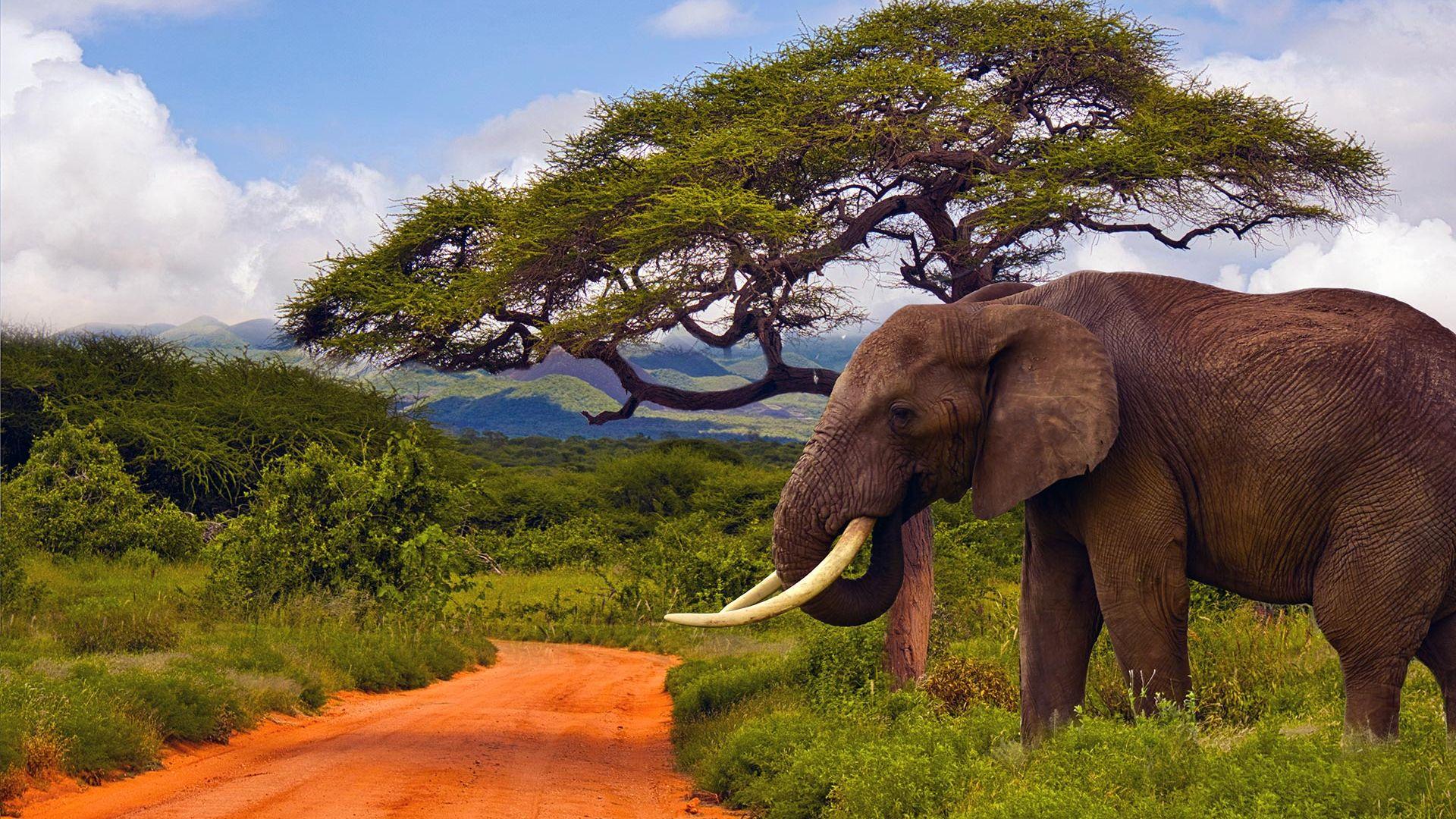 Share a Trip Charter Kenya - Safari Tsavo & plaja Diani Beach, 8 zile - septembrie 2021