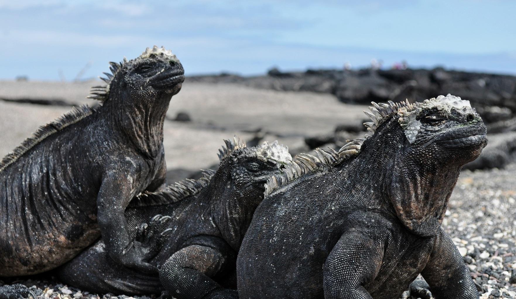 Galapagos – Ecuador