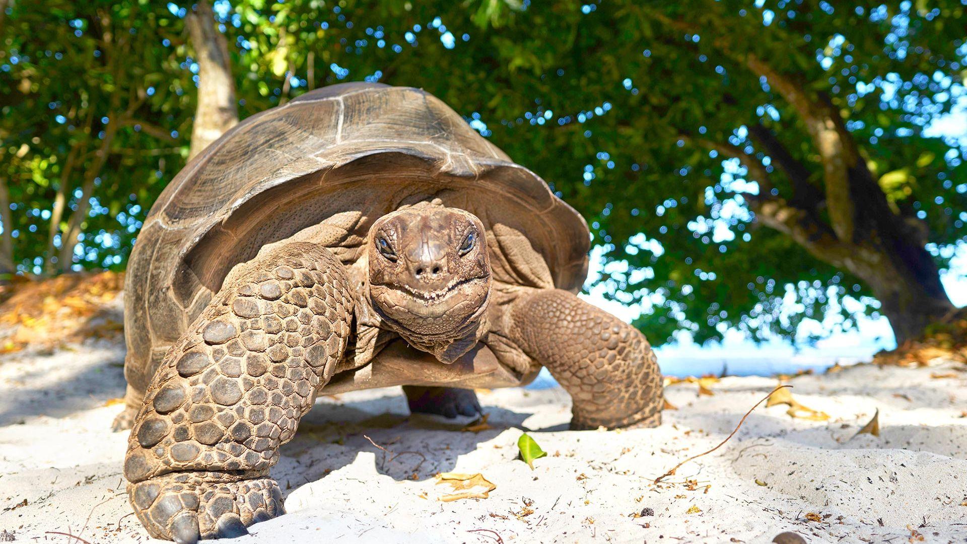 Circuit de grup - Discover Mahe & Praslin, Seychelles, 10 zile