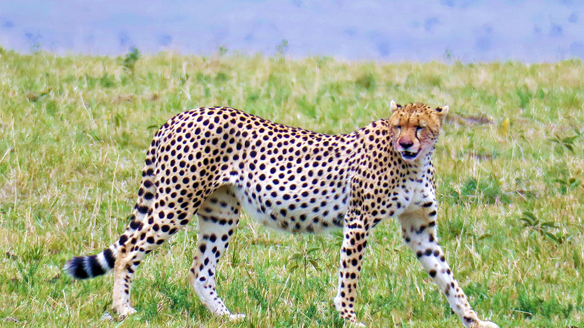 Family Experience Kenya - Safari & plaja, 12 zile - cu Cosmin Stan