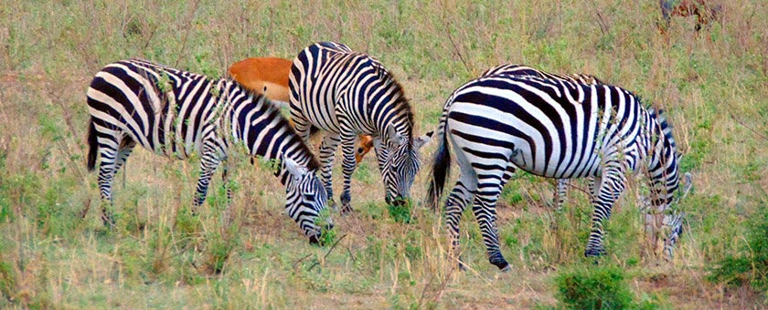 Share a Trip - Safari Kenya