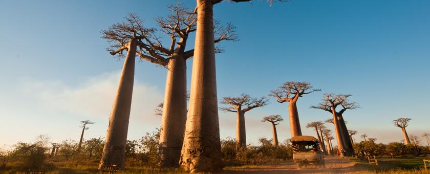 Share a Trip - Circuit Madagascar