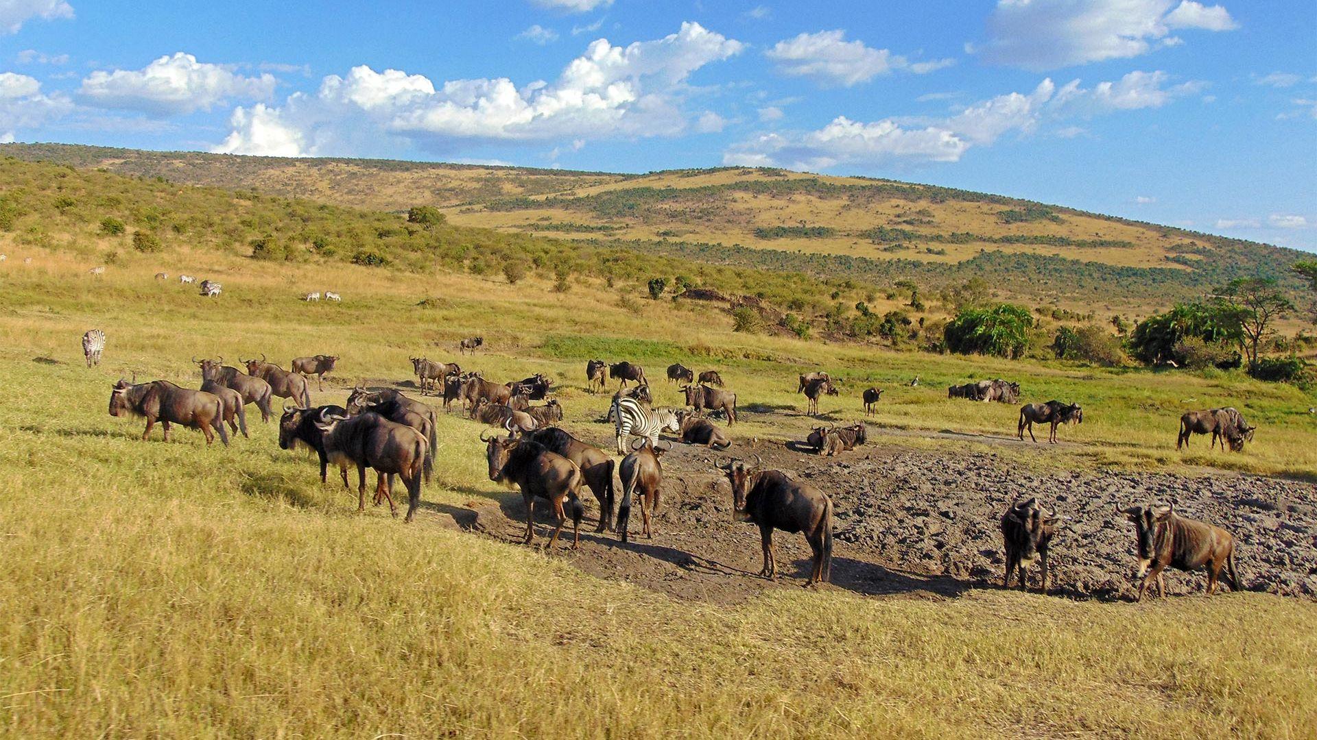 Share a Trip - Safari Kenya, 9 zile