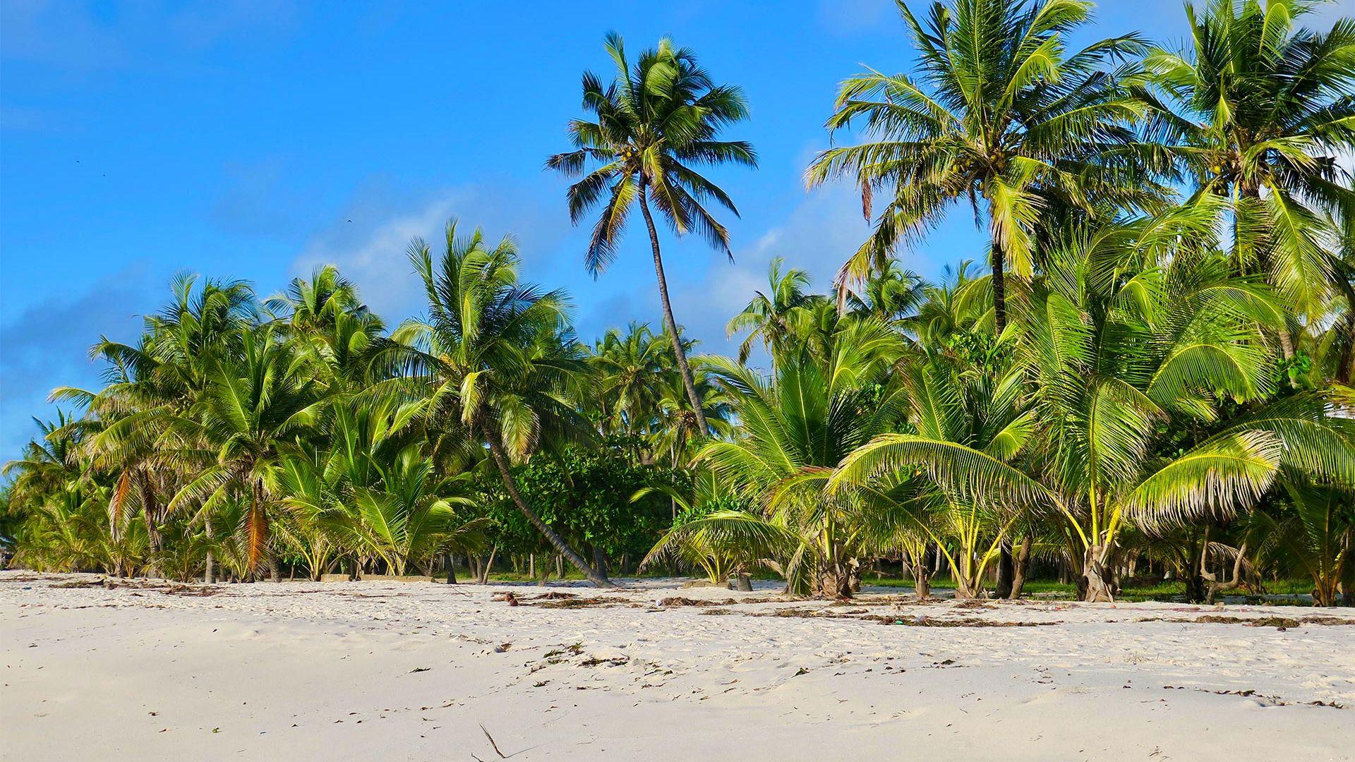 Share a Trip Charter Kenya - Safari Tsavo & plaja Diani Beach, 9 zile - februarie 2022