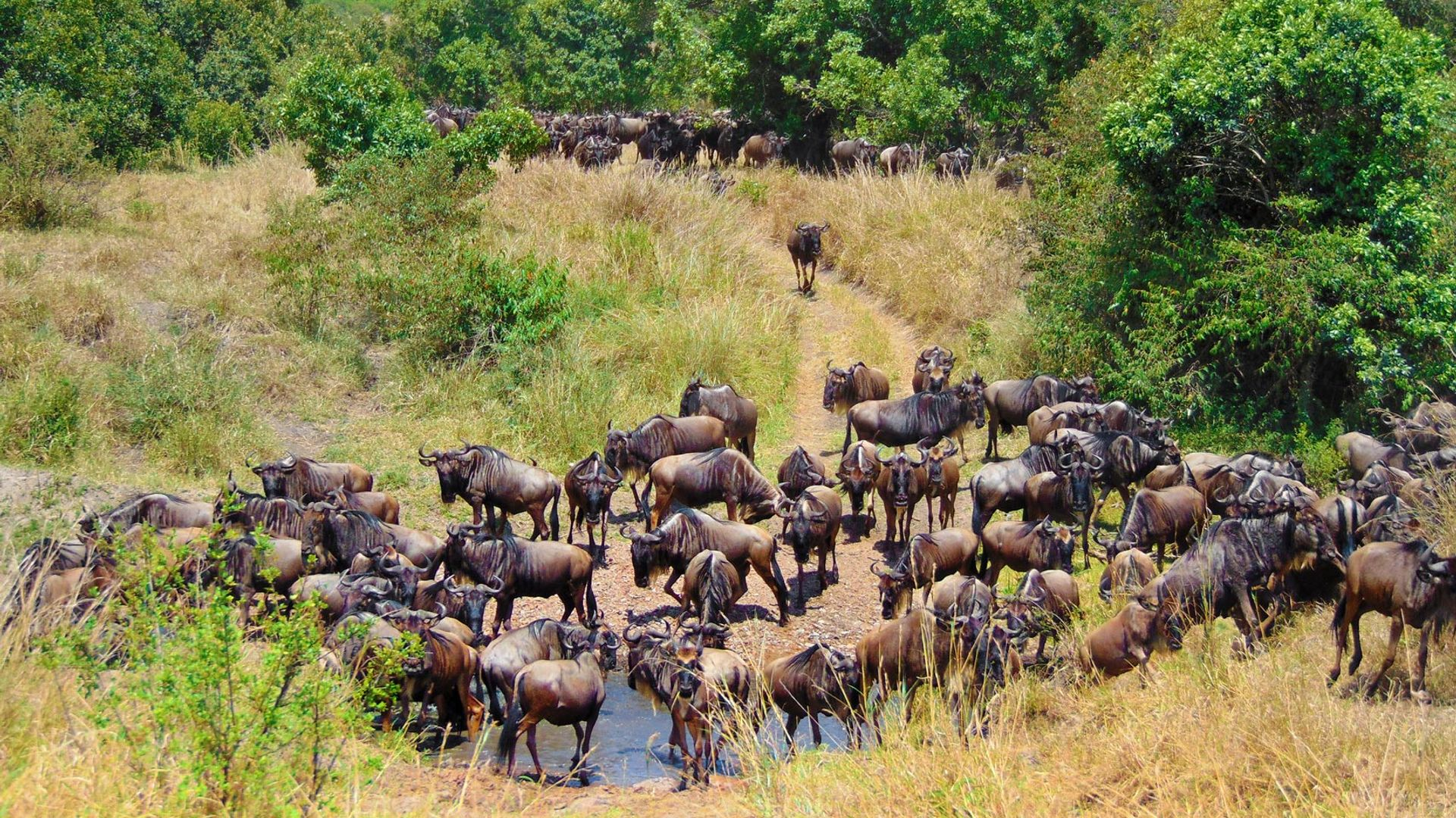 Circuit de grup - Kenya, safari Marea Migratie, 11 zile - iulie 2021 - cu Yulicary Sarracent