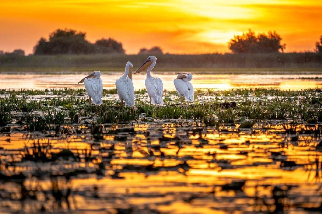 Sejur Delta Dunarii - Nisipurile de Aur, Bulgaria