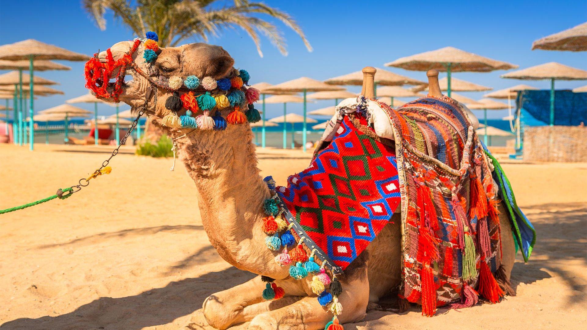 Revelion 2022 - Sejur plaja Hurghada, Egipt, 8 zile - zbor charter