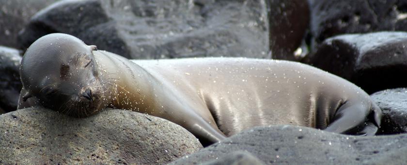 Share a Trip - Circuit Ecuador & Galapagos