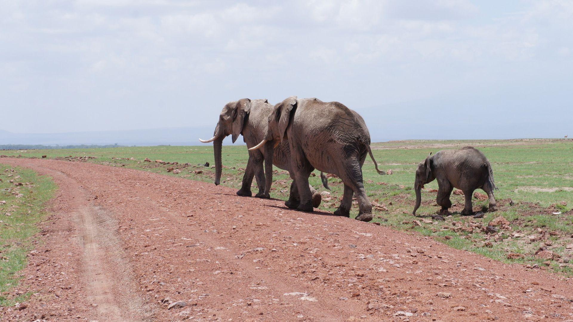 8 Martie - Circuit de grup - Kenya Touch, 9 zile