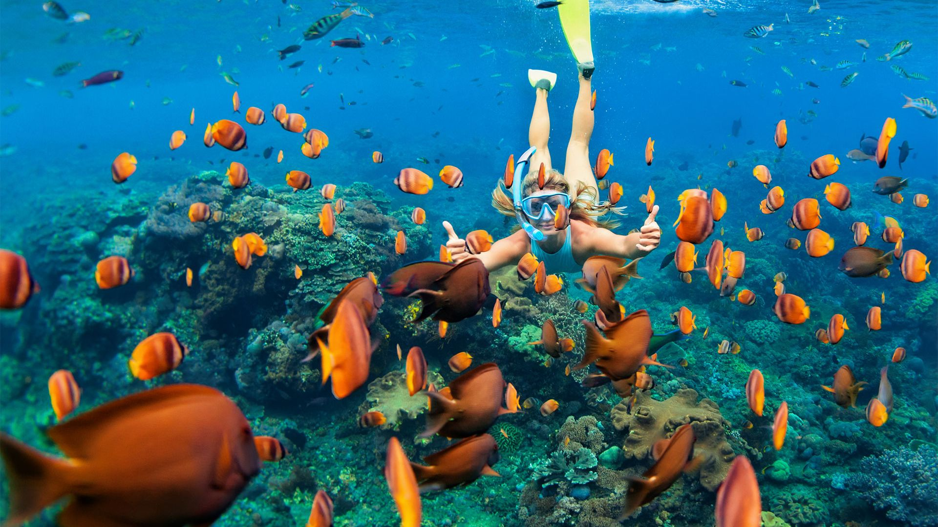Sejur charter Iberostar Punta Cana, 9 zile - noiembrie 2021