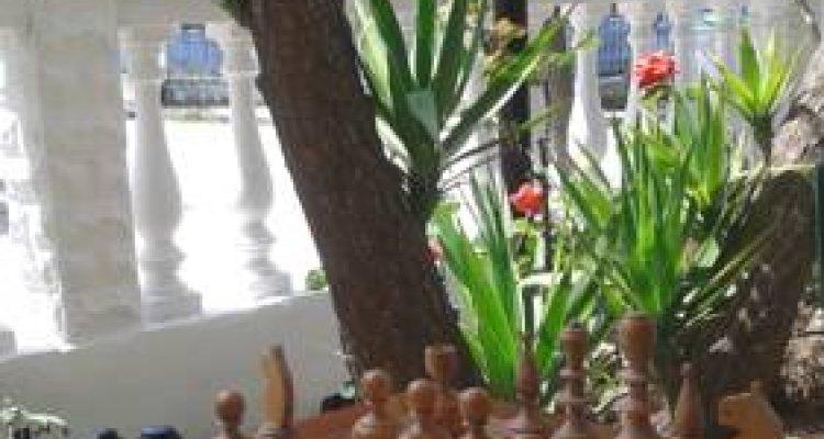 Dionisos Palms