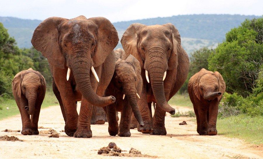 AFRICA DE SUD - Paste 2020