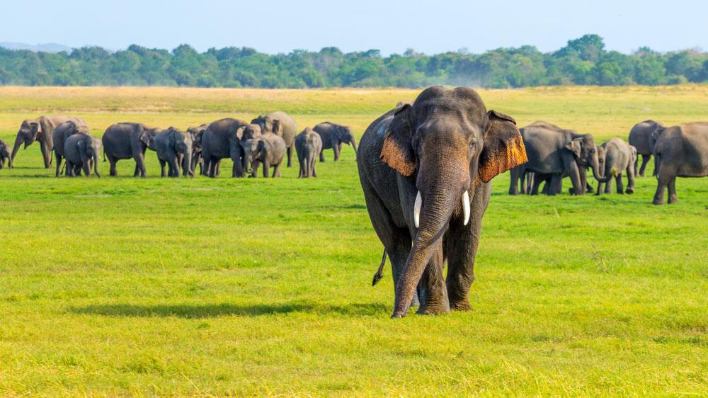 Sri Lanka Circuit-Sejur 2021