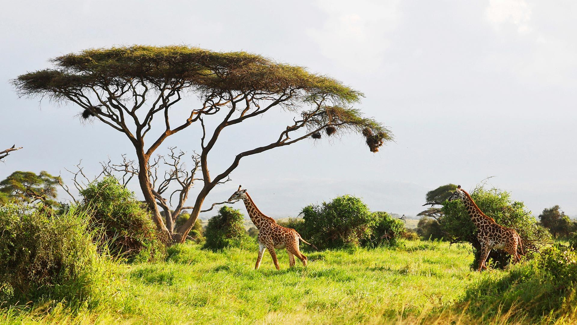 Share a Trip Charter Kenya - Safari Tsavo & plaja Diani Beach, 8 zile - iulie 2021