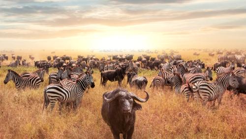 Safari Tanzania si sejur Zanzibar