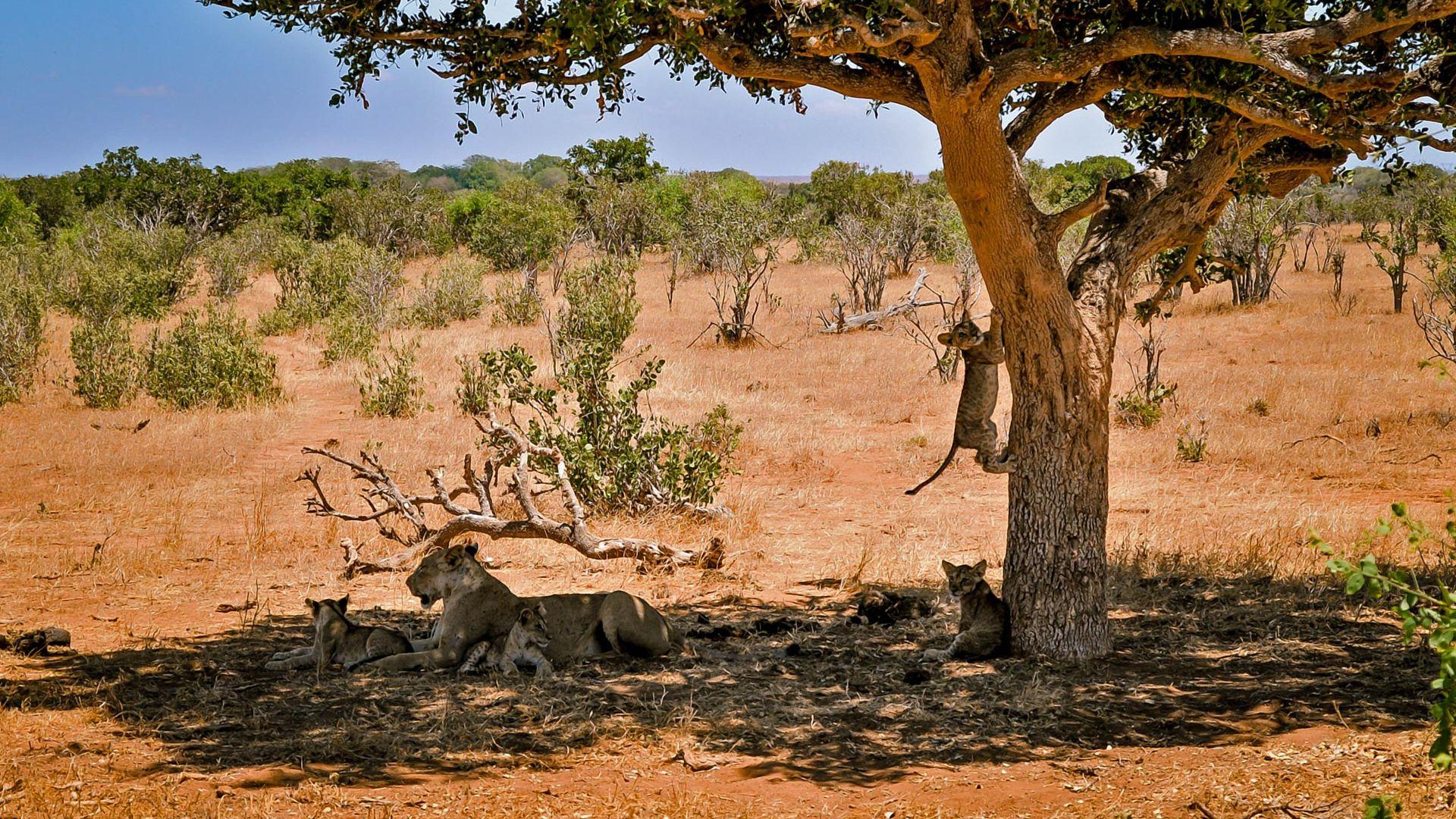 Craciun 2021 - Share a Trip Charter Kenya - Safari Tsavo & plaja Diani Beach, 9 zile