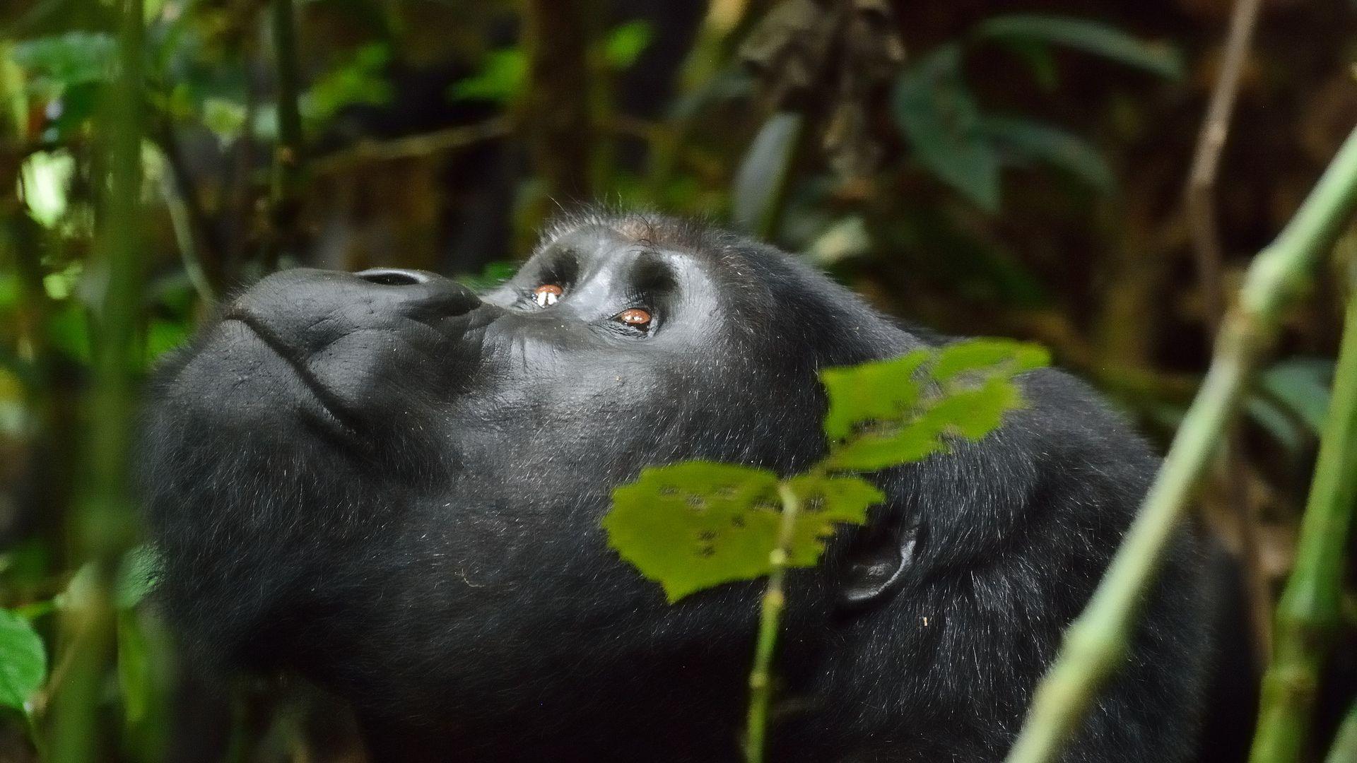 Circuit de grup - Explore Uganda, 10 zile - februarie 2022