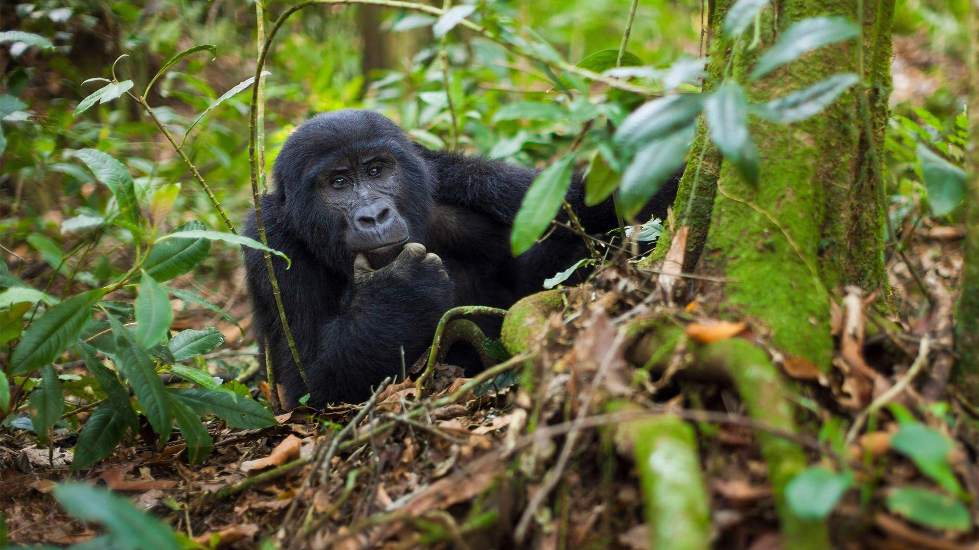 Circuit de grup - Explore Uganda & Rwanda, 10 zile