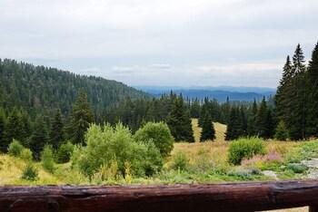 FOREST NOOK
