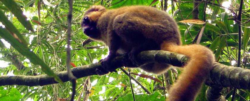 Discover Madagascar - iunie 2021