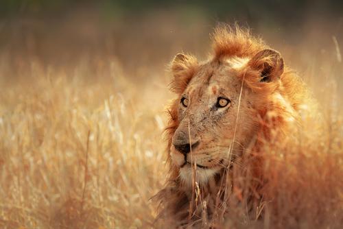 Circuit si Safari Africa de Sud