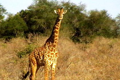 Share a trip - Safari Tsavo & plaja Mombasa