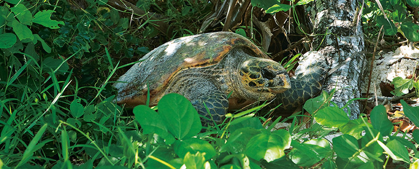 Sejur plaja Seychelles - ianuarie 2021