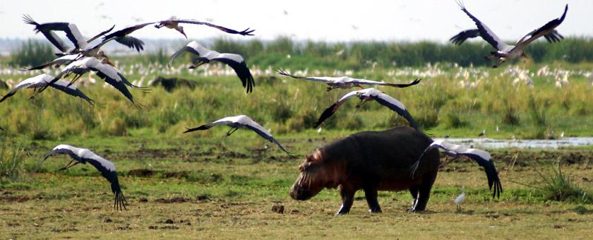 Best of Tanzania & Zanzibar - februarie 2021 - cu Yulicary Sarracent