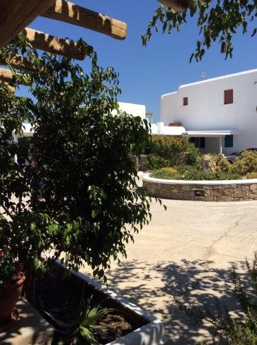 Liana Studios