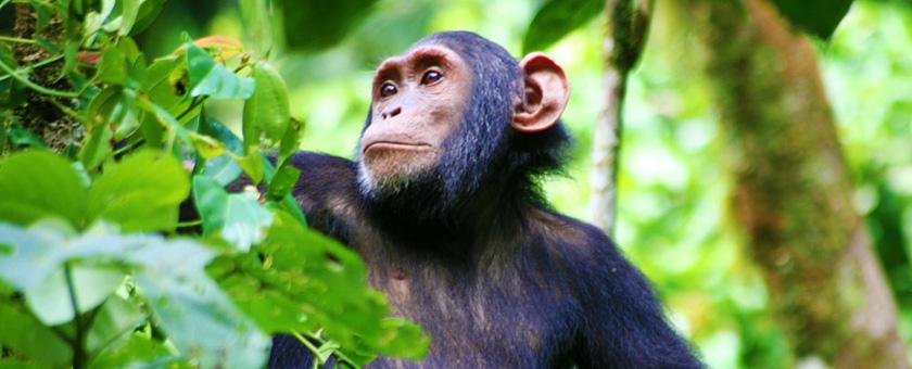 Share a Trip -  Safari Uganda