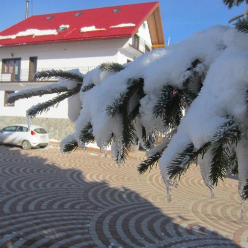 Pensiunea Alpina Casi And Spa