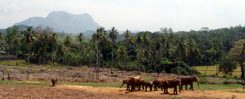 Circuit cu familia Sri Lanka - ianuarie 2021