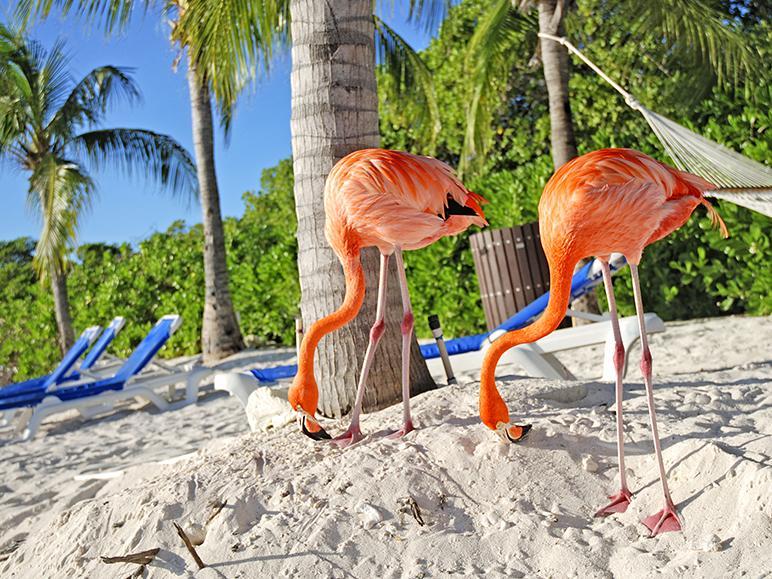 Croaziera Caraibe - Panama, Columbia, Aruba, Curacao, Bonaire