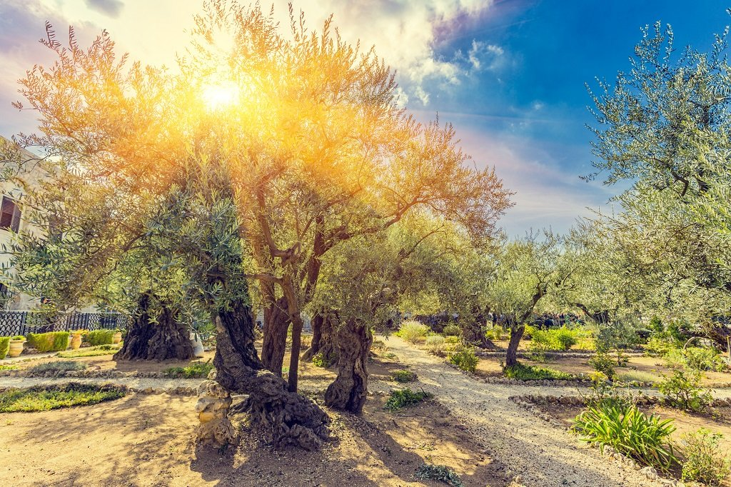 PASTE IN ISRAEL - Miracolul Sfintei Lumini 29.04.2021