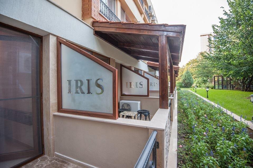 Iris - Mimoza