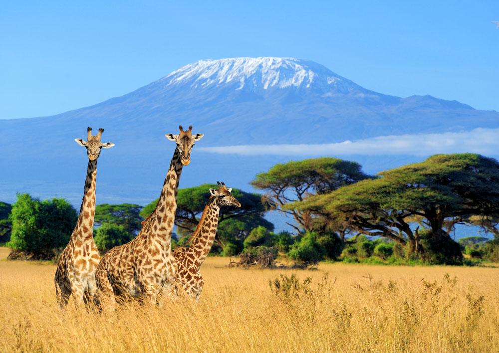 Kenya Safari si plaja la Oceanul Indian