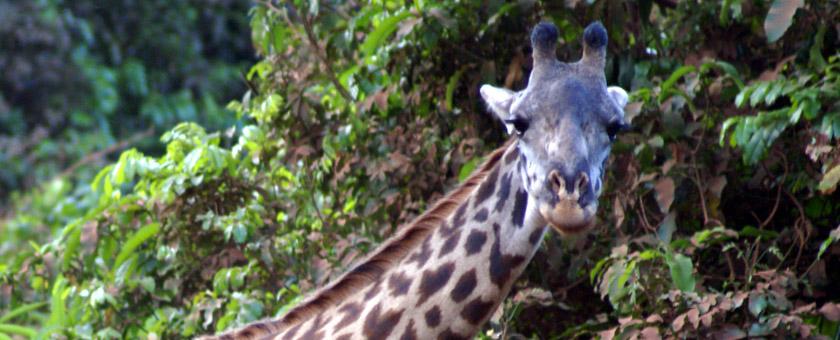Share a Trip -  Safari Tanzania