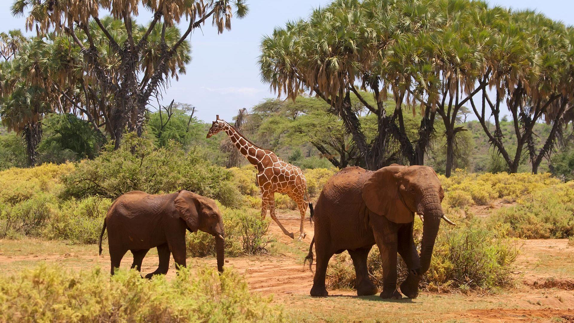 Sejur charter plaja & safari Severin Lodge, Kenya, 9 zile