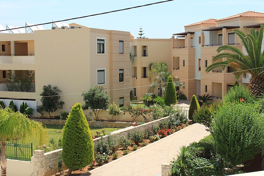 Creta Palm (K)