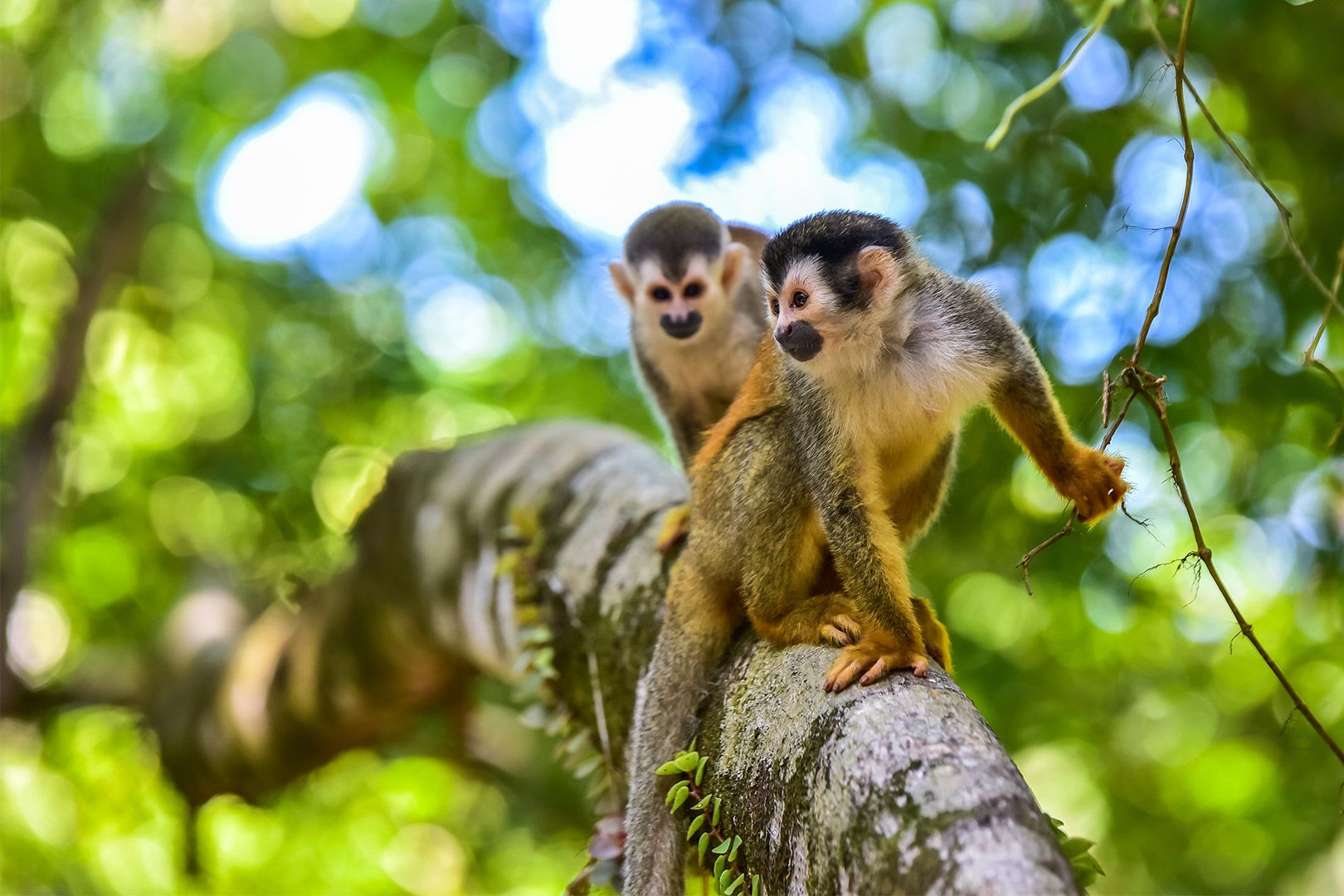 Family Experience Costa Rica, 11 zile - cu Cosmin Stan