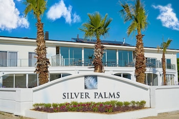 Silver Palms