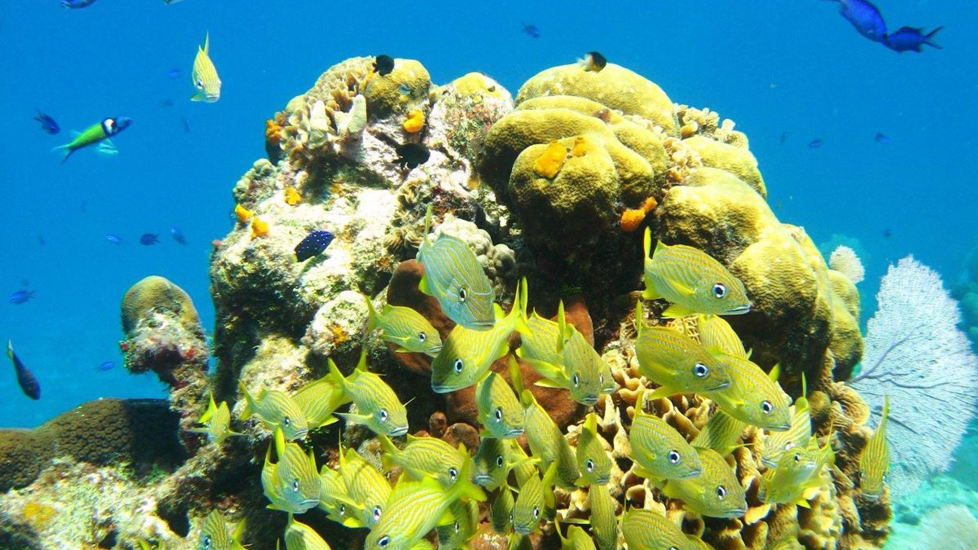 Revelion 2022 - Sejur plaja Riviera Maya, Mexic, 10 zile