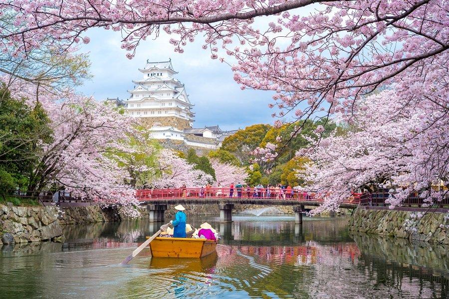 Japonia 2022- Sarbatoarea cireselor in floare