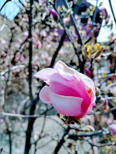 Pensiunea Magnolia
