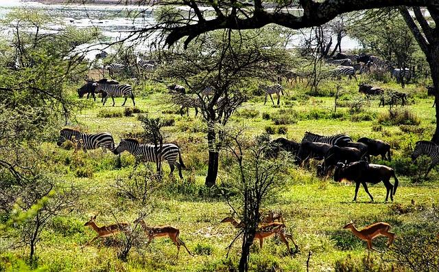 Tanzania – Zanzibar